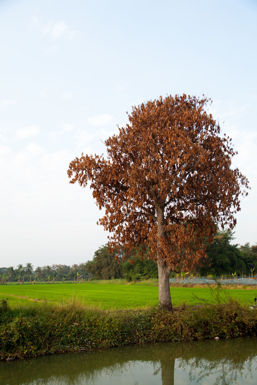 tree, beauty in nature, nature, tranquility, growth, landscape, tranquil scene, field, lone, scenics, day, no people, outdoors, sky, grass, branch, flower, fragility, freshness