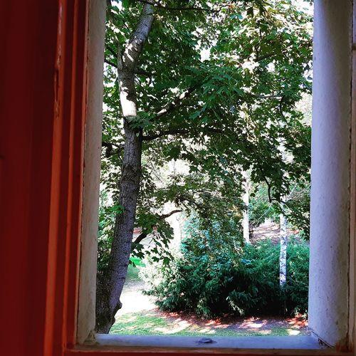 Tree Window