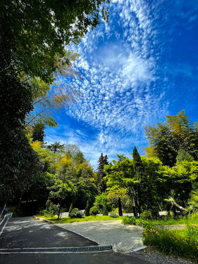 Road amidst trees in forest against blue sky