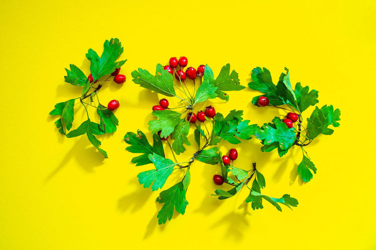 Close-up of berries against yellow background