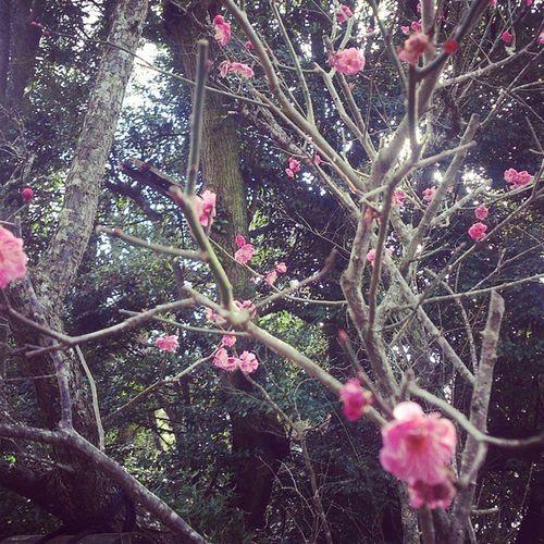 世の中は恋繁しゑやかくしあらば梅の花にもならましものを 万葉集 朝から解体前の生きてるうなぎを見てしまった 先取り梅祭り 散歩 万葉集に共感 成田山 うなぎ