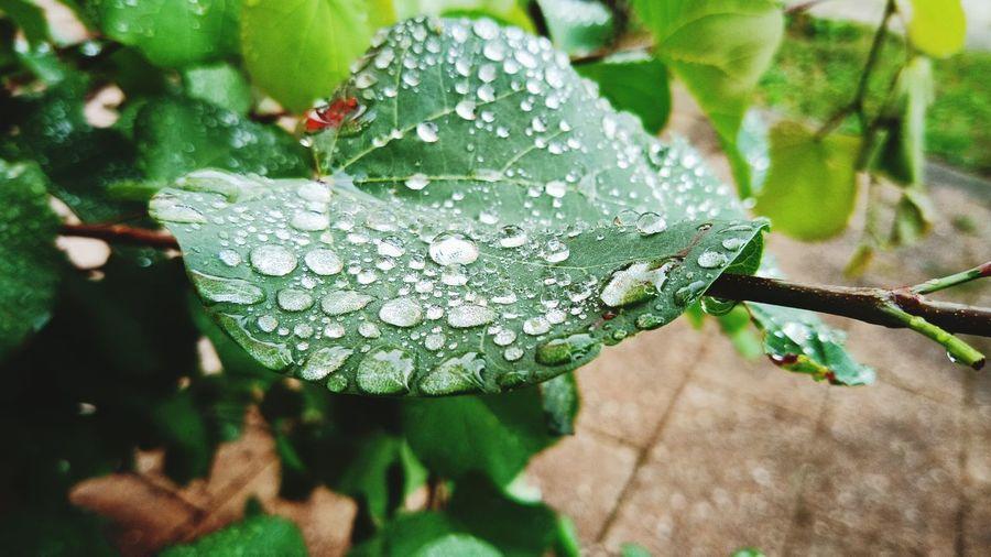 water drop Leaf Plant Green Color Water Drop Drop RainDrop Grasshopper Blade Of Grass Rainy Season Wet First Eyeem Photo