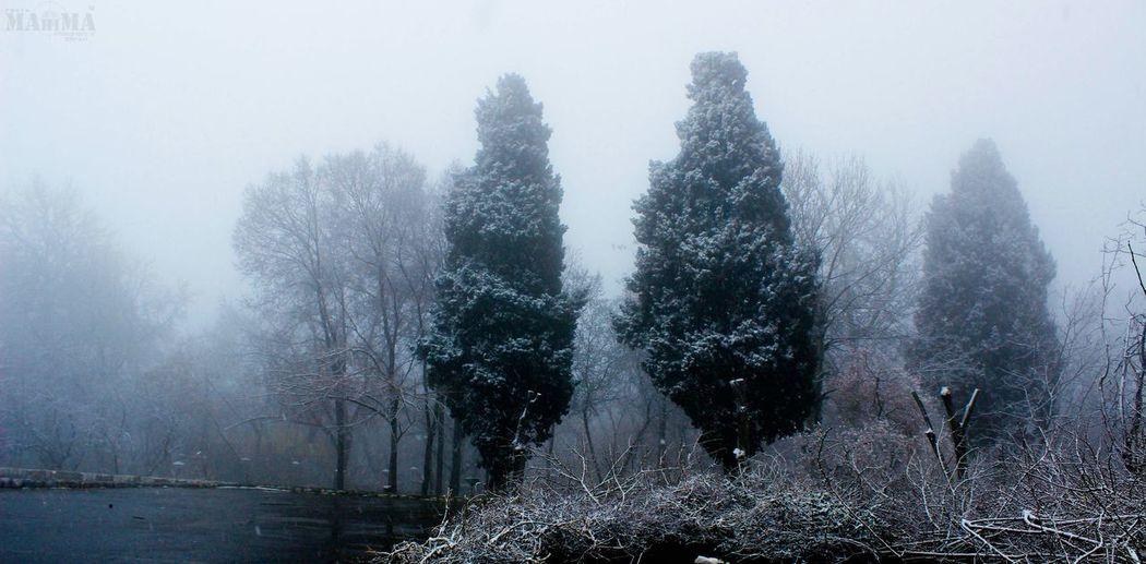 niasar_kashan_ Iran Trees Smog Beautiful Smog Snow Hello World EyeEm Best Shots - Trees