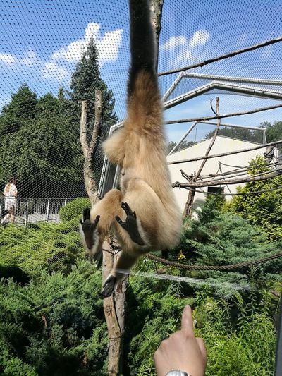 Animal Monkey Low Section Tree Human Leg Upside Down Men Sky Close-up