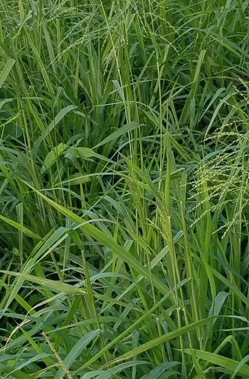 Growth Green Color Agriculture Crop  Backgrounds Field Grass Beauty In Nature Freshness Simplicity Fragility Outdoors Abstract Rural Scene Leaf Plant Abstractions In Colors