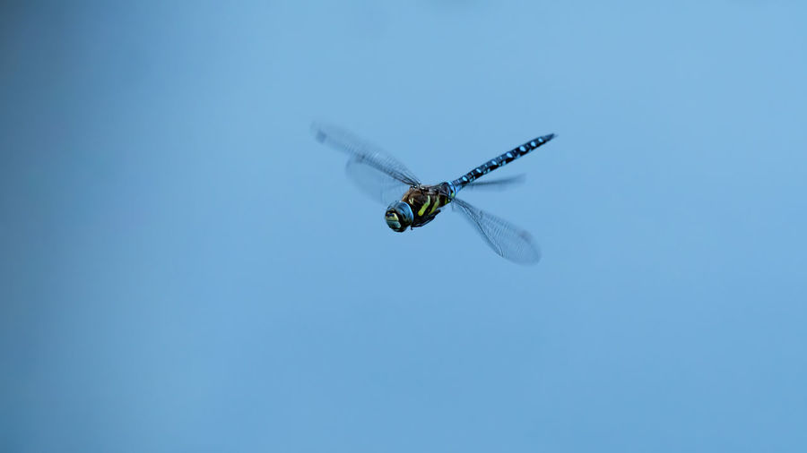 Close-up of insect flying against blue sky