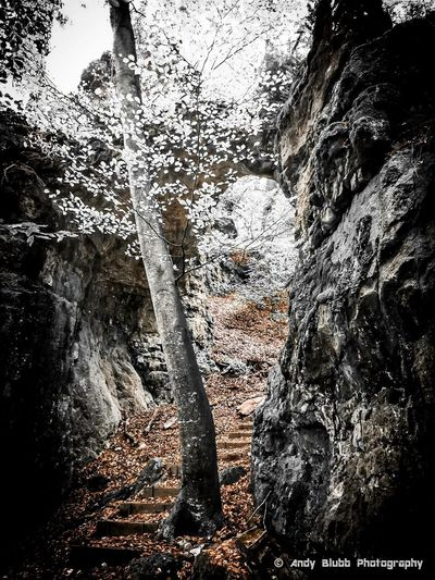 Fall Autumn Forest Wood Felsentor Nature LovemyhomeplaceHanging Out Hello World Taking Photos