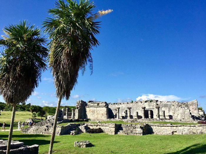 Las ruinas de Tulum Coconut Trees Mayan Wonders Mayan Tulum, Mexico Tulumruins Tulum Ruinas Ruins Plant History Tree Sky Architecture Built Structure Travel Destinations Ancient Tropical Climate Tourism Travel