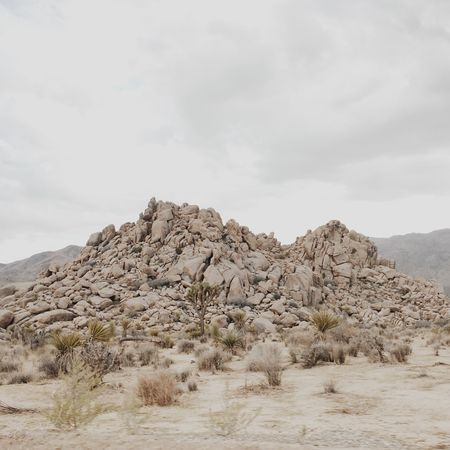 Beauty In Nature Day Joshua Tree Landscape Los Angeles, California Mountain Nature Nature Reserve No People Outdoors Scenics Sky Snow