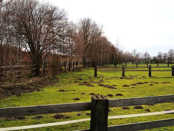 Tree Grass Nature No People Day Tranquility Outdoors Growth Sky Lush - Description Farmland Landscape Fence Spring Molehills