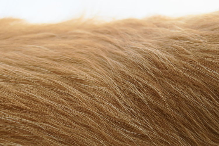 Close-up of animal hair