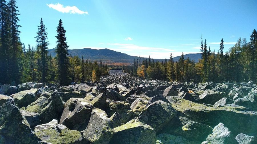 Panoramic view of rocks in forest against sky