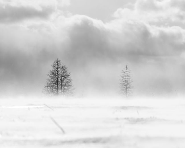 Out on the bog when the wind picked up Winter Snow Tree Cold Temperature Nature Scenics - Nature Landscape Beauty In Nature Snowing Tranquility