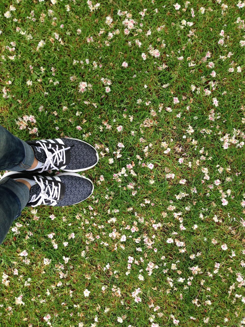shoe, low section, human leg, one person, human body part, grass, canvas shoe, standing, human foot, real people, high angle view, day, outdoors, directly above, lifestyles, nature, men, people