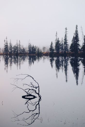Reflection Water Tranquility Tree Lake Tranquil Scene Beauty In Nature Scenics - Nature Plant Sky Nature No People Non-urban Scene Day Waterfront Idyllic Growth Outdoors Reflection Lake