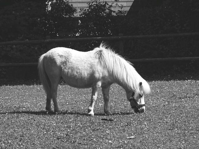 My Little Pony Pony Horse Horse Life Little Horse White Pony Animals Animal Animal Photography First Eyeem Photo