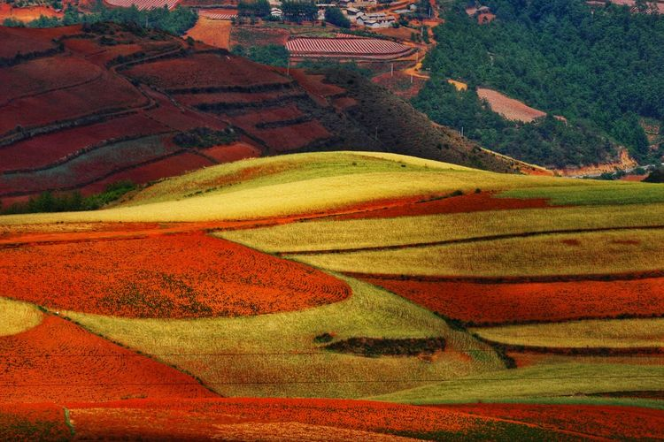 Yunnan China Photos Landscape_photography Landscape_Collection China Landscape Rural Scene Multi Colored Cereal Plant Terraced Field Agriculture Rice Paddy Field Wheat Crop  Farm Patchwork Landscape Rolling Landscape View Into Land Cultivated Land Rice - Cereal Plant Plantation Agricultural Field Corn - Crop Tranquil Scene