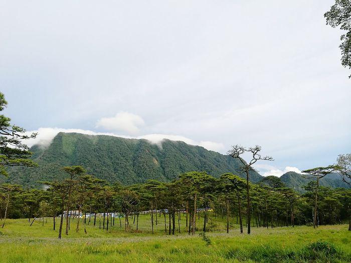 ภูสอยดาว2016 Landscape Tree Mountain Field Green Color Mountain Range Travel Photography