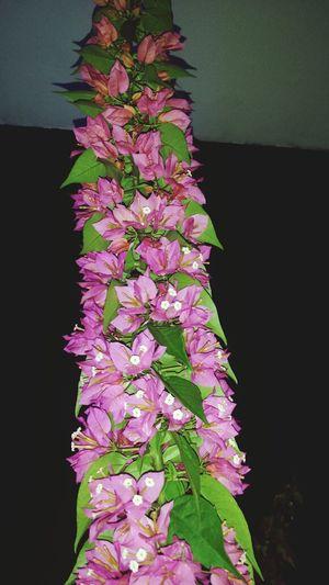 Flowers I Love Nature! Beautiful Nature