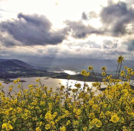 Flower Yellow Nature Landscape Lake Clouds Sardinia Sardegna Italy