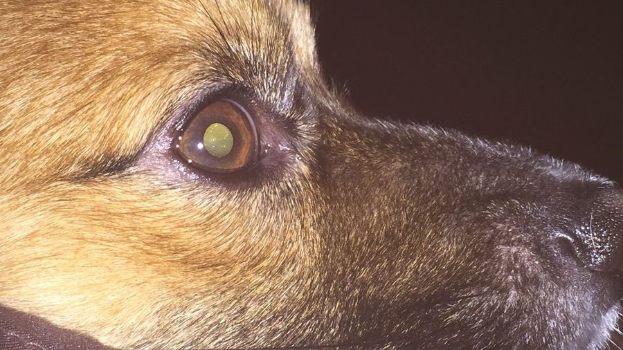 Chewie Closeup Pets One Animal Dog Domestic Animals Mammal Animal Themes Animal Head  Animal Hair Portrait Close-up No People Outdoors Day Nature EyeEmNewHere
