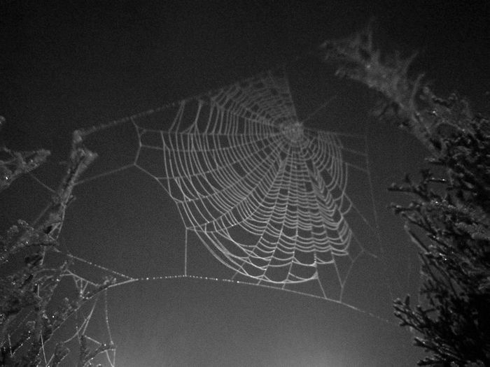 Nature Outdoors Concentric No People Black & White Illuminated Fine Art Photography Exceptional Photographs Nature Tela De Araña Spider Silk HUAWEI Photo Award: After Dark
