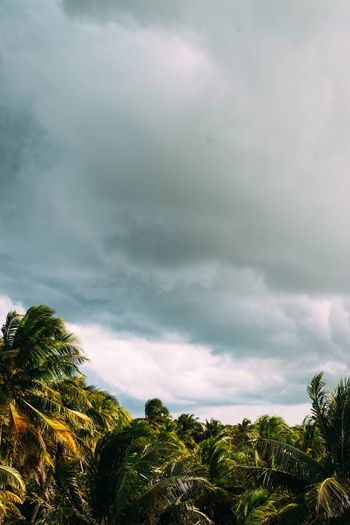 Tree Cloud - Sky Sky Nature No People Outdoors Beauty In Nature Scenics Low Angle View Green Color Storm Cloud Landscape Tranquility Palm Tree Day Treetop