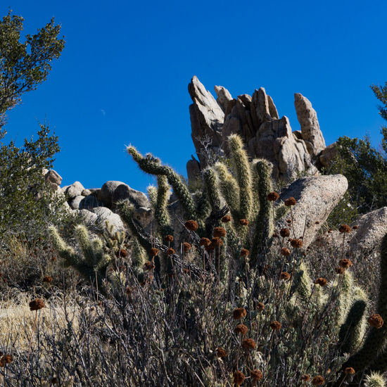 Cactus Plant Nature Growth Blue No People Sea UnderSea Uncultivated Saguaro Cactus Scenics Day Beauty In Nature Travel Destinations Southern California McCain Valley Arid Climate Landscape Hiking Rocks Plant Prickly Pear Cactus Outdoors Beauty In Nature Sky