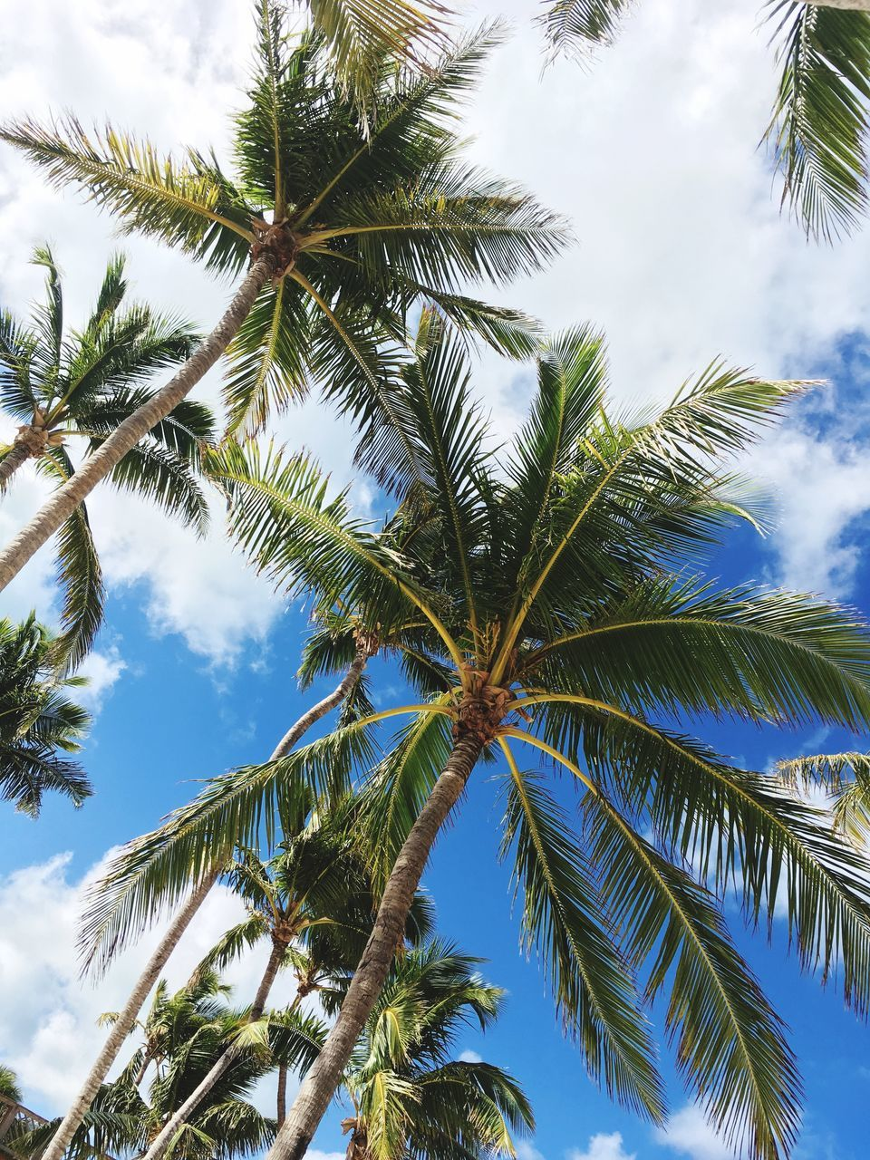 tree, palm tree, low angle view, nature, growth, sky, beauty in nature, day, leaf, no people, green color, tree trunk, outdoors, branch, scenics