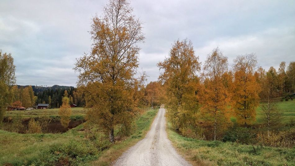 Tree The Way Forward Sky Nature Day Outdoors Scenics Beauty In Nature Road No People Landscape TheRightWay Yellow Autumn Nordic Countries Sweden Nature Värmland Tranquil Scene Beauty In Nature