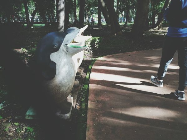 What are you laughing at, guys? Animal Themes Nature Animals In The Wild Outdoors Tree Togetherness Day People Low Section Park Morning Light Morning Walk Mobilephotography Xiaomiphotographyindonesia Xiaomiphotography Mi4c Jakarta Indonesia_allshots