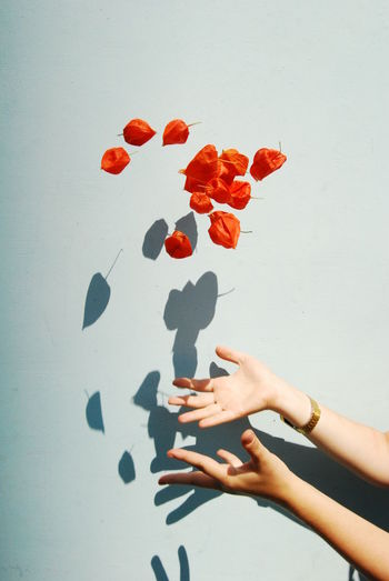 Hands Throwing Winter Cherries Against Blue Background