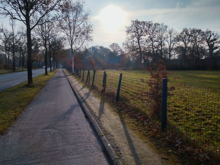 Winter Sun. Streetphotography Street On The Road Cycling Sky Sun Sunlight Nature Tree Sky Fence Street Scene Barbed Wire Picket Fence