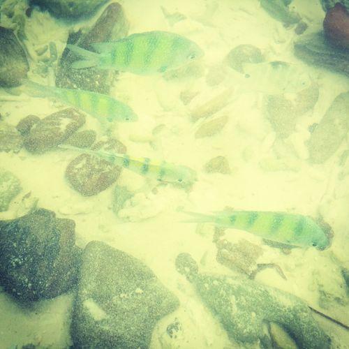 Fish Indianocean Ocean Beach Beauty In Nature Islands