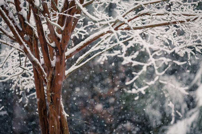 Shades Of Winter Bare Tree Beauty In Nature Blizzard Branch Close-up Cold Temperature Day Frost Frozen Frozen Water Ice Ice Crystal Ice Rink Icicle Nature No People Outdoors Snow Snowdrift Snowflake Snowing Spruce Tree Tree Weather Winter
