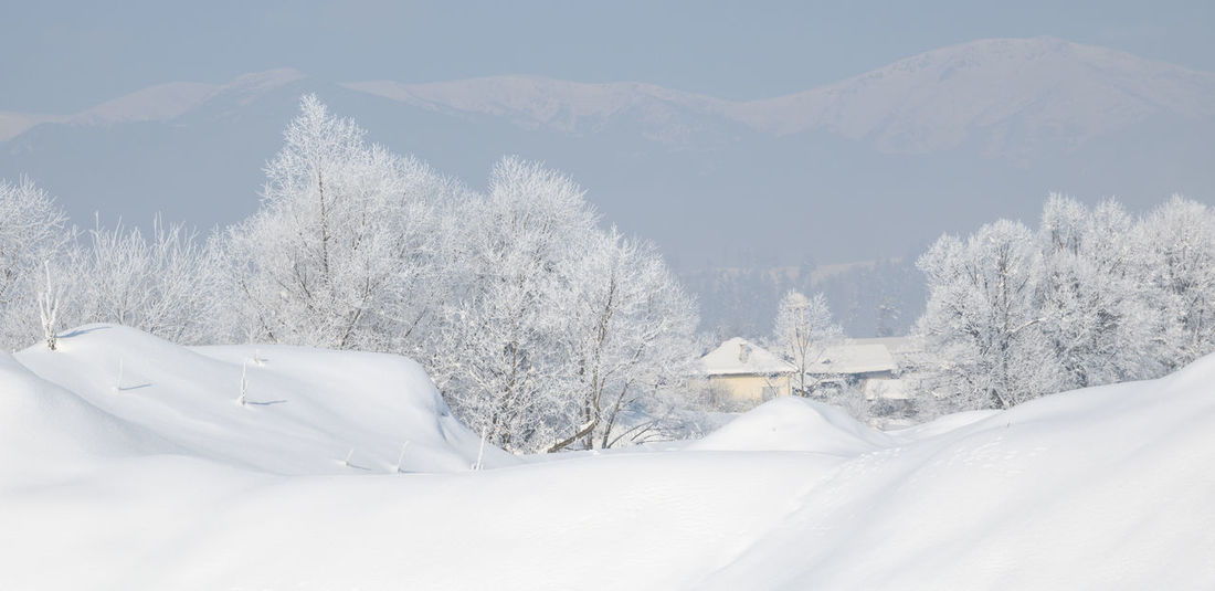 Fantastic winter landscape. Trees covered with hoarfrost and snow in winter on mountains background. Beauty In Nature Chill Cold Temperature Countryside Cover Day Focus On Foreground Forest Freeze Frost Hoarfrost Ice Landscape Mountain Natural Nature No People Outdoors Outdor Panarama Rime Snow Travel White Color Winter EyeEm Selects