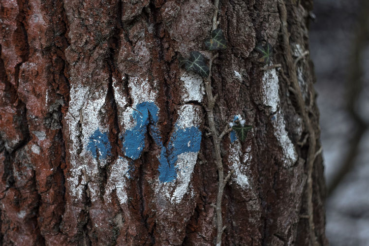 EOS Hungary🇭🇺 Nature Nature Photography Tourist Region Winter Wintertime Blue And White Canon Close-up Day Eos1300d Hiking Adventures Nature No People Outdoors Red Tree Trunk Red Trunk Textured  Tourism Tourist Destination Tourist Sign Tree Tree Trunk Vintage Lens On Modern Camera