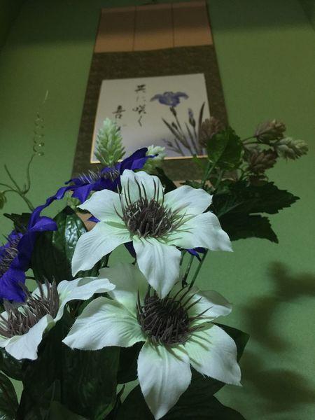 Vscogood Japanese  WA 禅 VSCO Cam Flower Collection Flowers