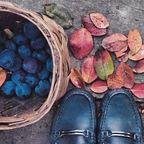 Добрре утро, друзья!🙌🙌 Урожай осени в корзинке,значит быть шарлотке.🍁🍁 для жёлтых_листьев_настроение от @paramariba81 @manka_v_kruzhevah @shintapaly Бологое