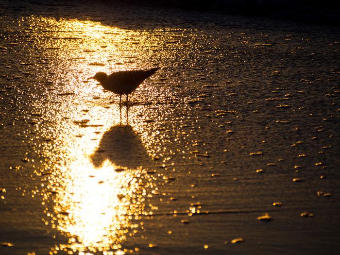 Bird on sea shore during sunset