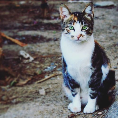 Domestic Cat One Animal Looking At Camera Portrait Day Close-up Domestic Animals Animal Themes No People Outdoors Whisker Taking Photos Capaila Photo's 1day/1pic EyeEm 😝😎⏳ Instagood 5megapixels