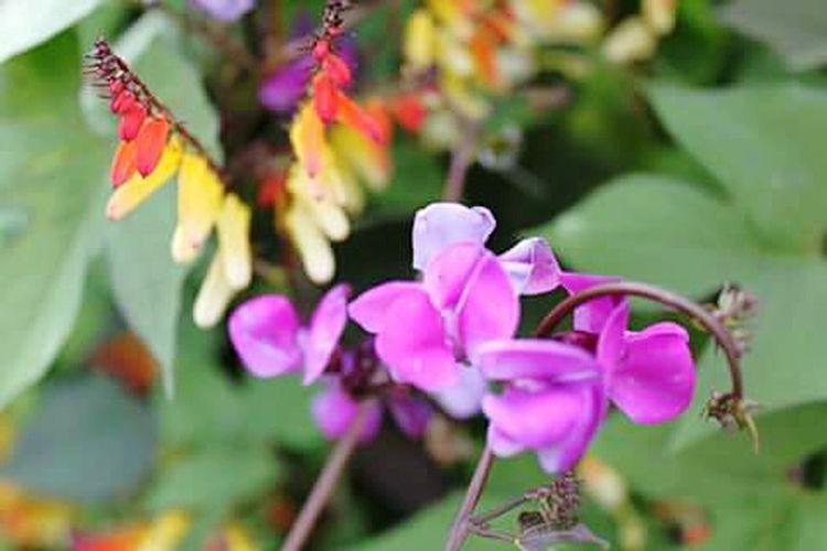 Fleurs Flowers Colorful Enjoying Life Jardin Extraordinaire Ensoleillée Beautiful Nature Belle Aprem