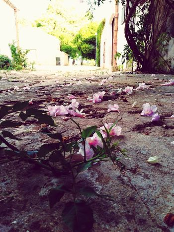 Flowers Beautiful Day Flowers Carpet Died Nature The Week On EyeEm Autumn September Pink Flower Pink Flowers Ground EyeEmNewHere Perspectives On Nature