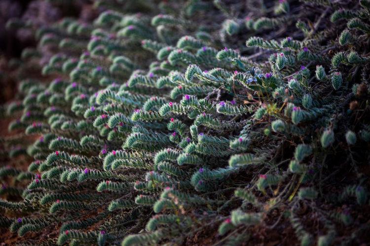 Full frame shot of multi colored plant