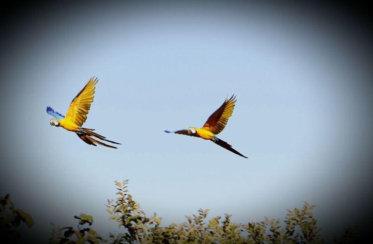 Travel Photography EyeEm Best Shots Nature Photography Taking Photos MinasGerais💜 Flight Araraazul Brazil ❤ Eyemphotography