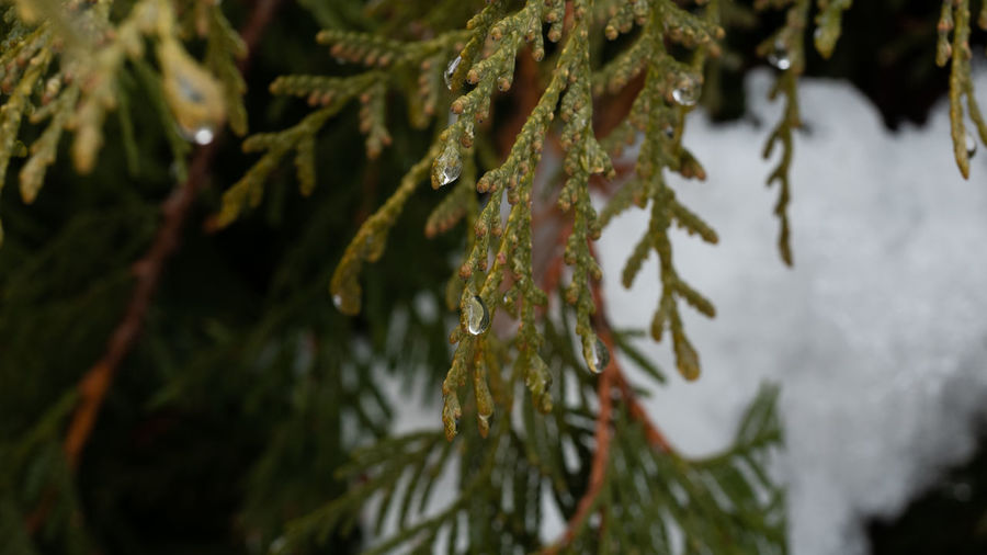 Thaw Needle - Plant Part Fir Tree Coniferous Tree Pine Tree Ice Winter Cold Temperature Water Beauty In Nature Close-up Green Color