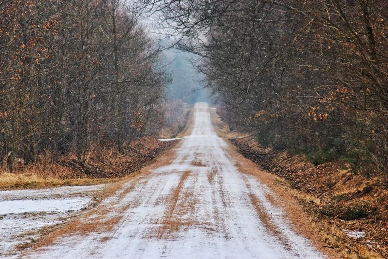 Road passing through forest during winter
