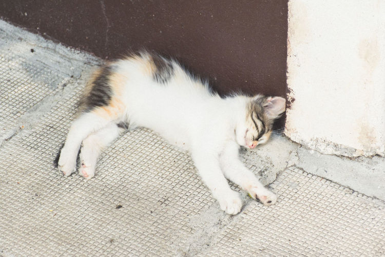 High Angle View Of Cat Sleeping Outdoors