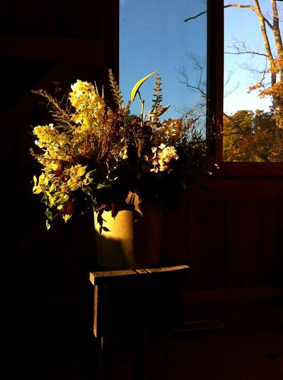 Autumn Colors Flowers Composition Fade Wildflowers Bouquet Home Cosy Nature Window Light