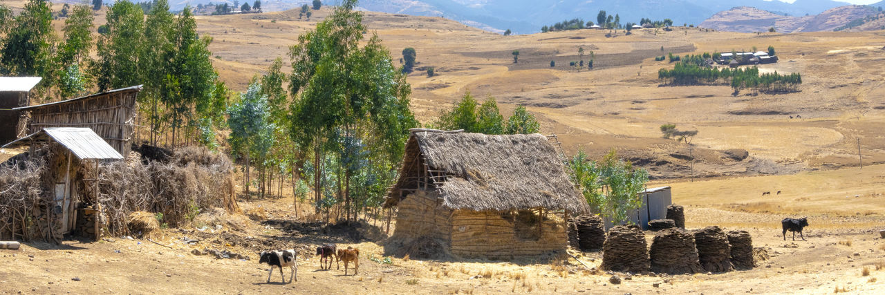 Landscape Scenics - Nature Field Environment Domestic Animals Outdoors No People Panoramashot Harvest Time Harvest Season Ethiopia Scenic Landscapes Picturesque Traditional House Dwelling Panorama